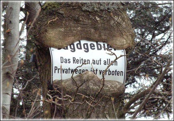 Auch Bäume leben...