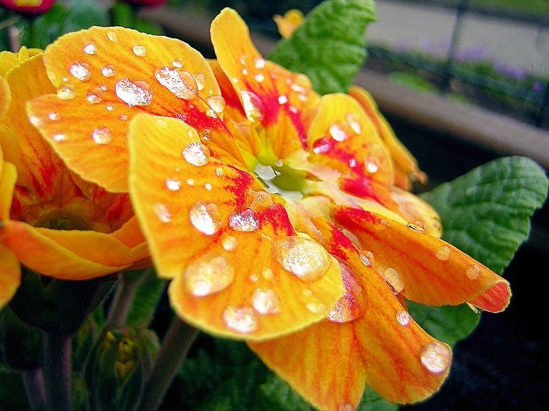 Auch Blumen können weinen