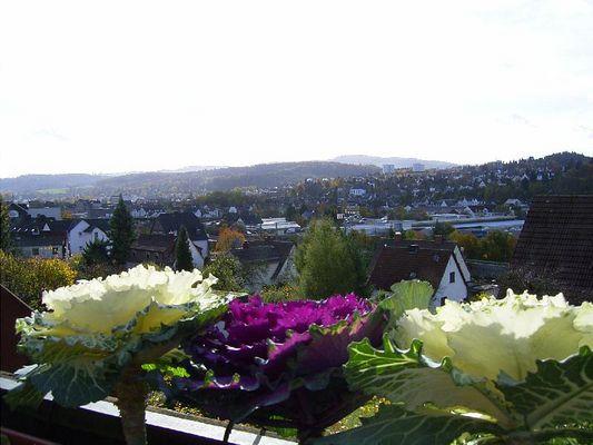 Auch Blumen verdienen eine schöne Aussicht