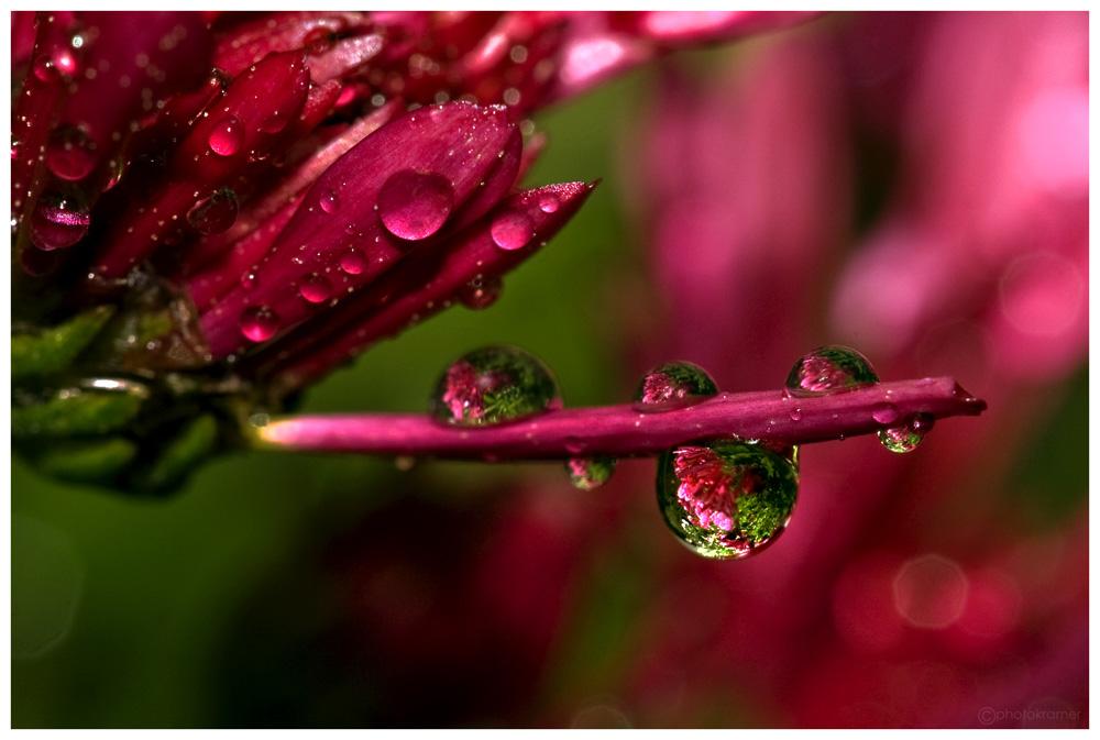 Auch Blumen weinen