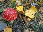 ... auch das ist der Herbst