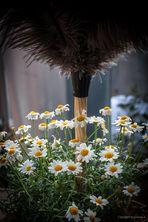 """Auch das ist eine """"Sti(e)l-Blüte...#1.568##"""