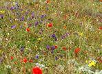 Auch das ist Teneriffa : Bunte Blumenwiesen. . .und weit und breit totale Ruhe
