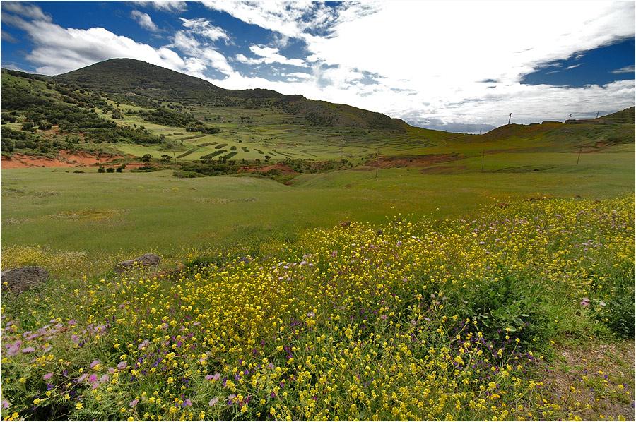 Auch das ist Teneriffa : Saftige Wiesen und Weiden