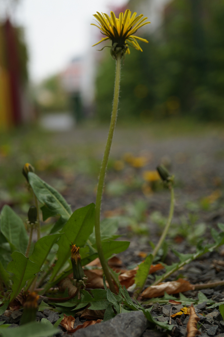 Auch das Leben einer Pflanze ist nicht immer leicht!