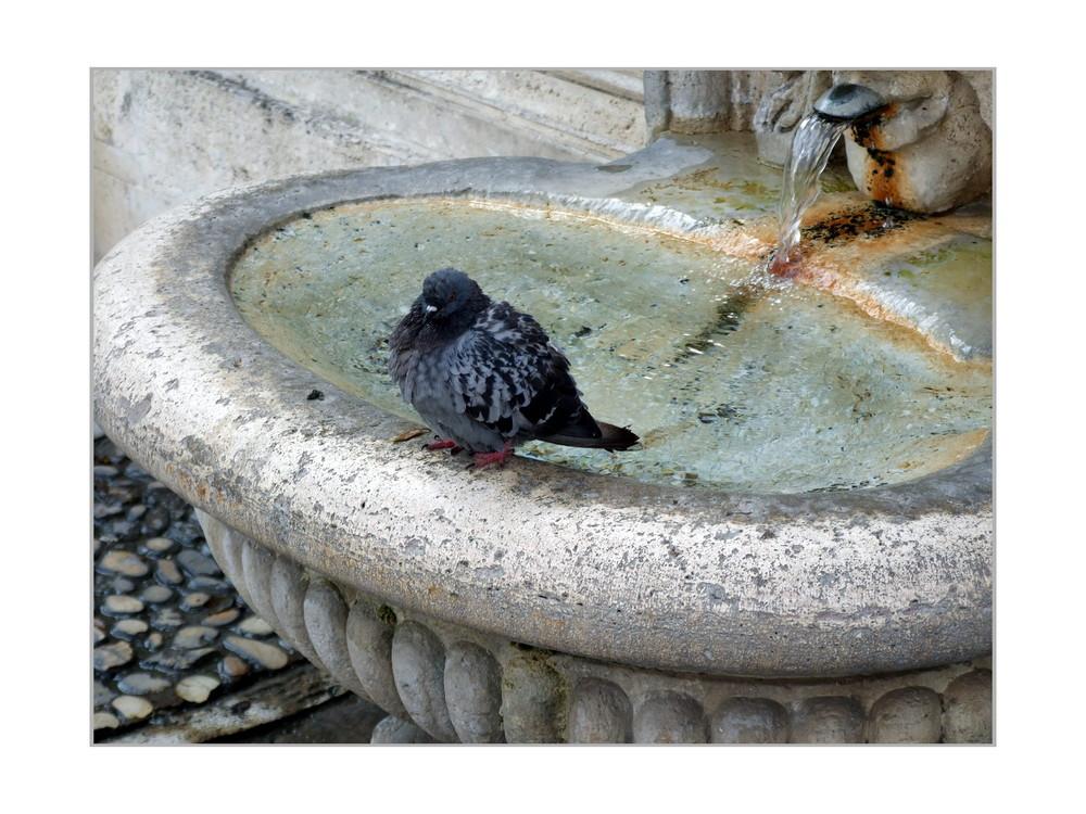 Auch den Tauben wars zu heiß!