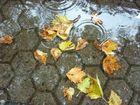 Auch der Herbst hat schöne Seiten