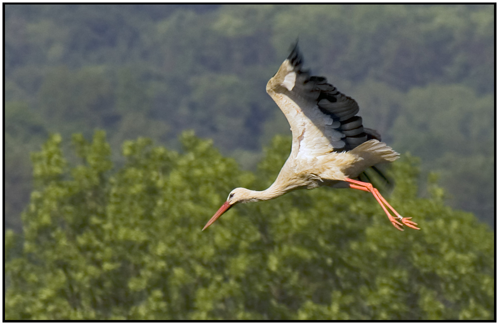 Auch der Storch...