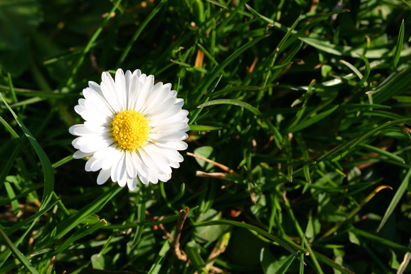 Auch die  kleinen Blüten können leuchten.
