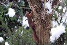 auch Eichhörnchen haben in diesen Tagen Hunger................