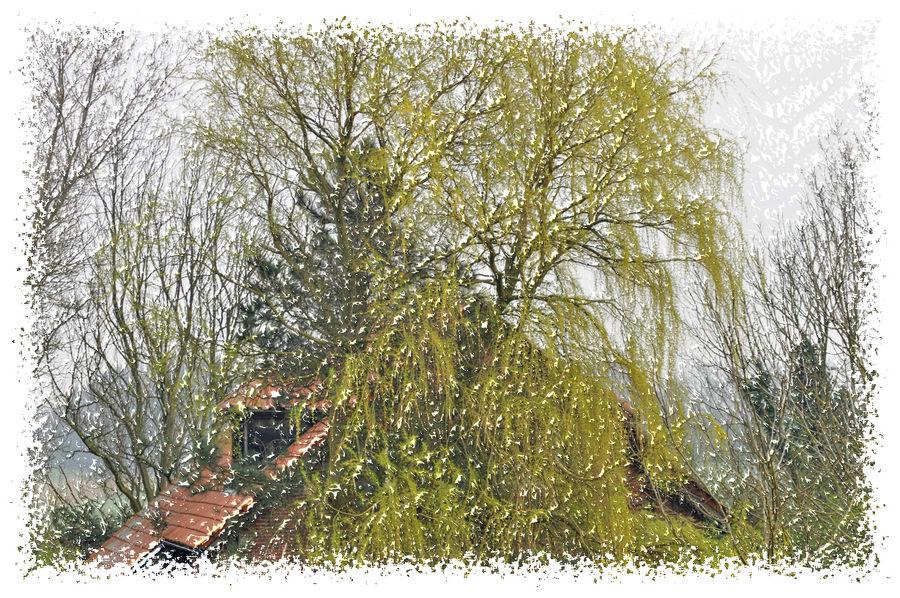 Auch ein dürrer Baum belebt die Landschaft