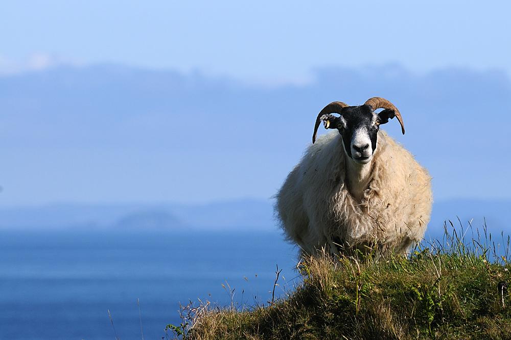 Auch ein echter Schotte (Isle of Skye)