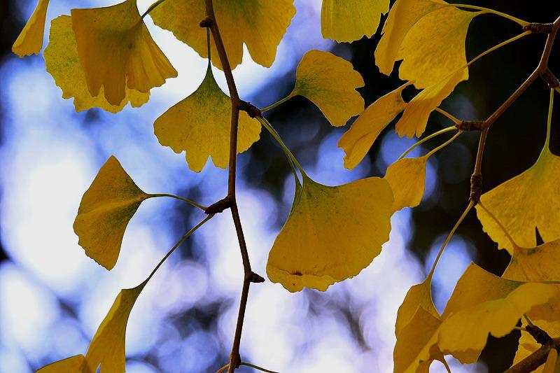 Auch ein Gesundheitsbaum kriegt Spuren der Vergänglichkeit...