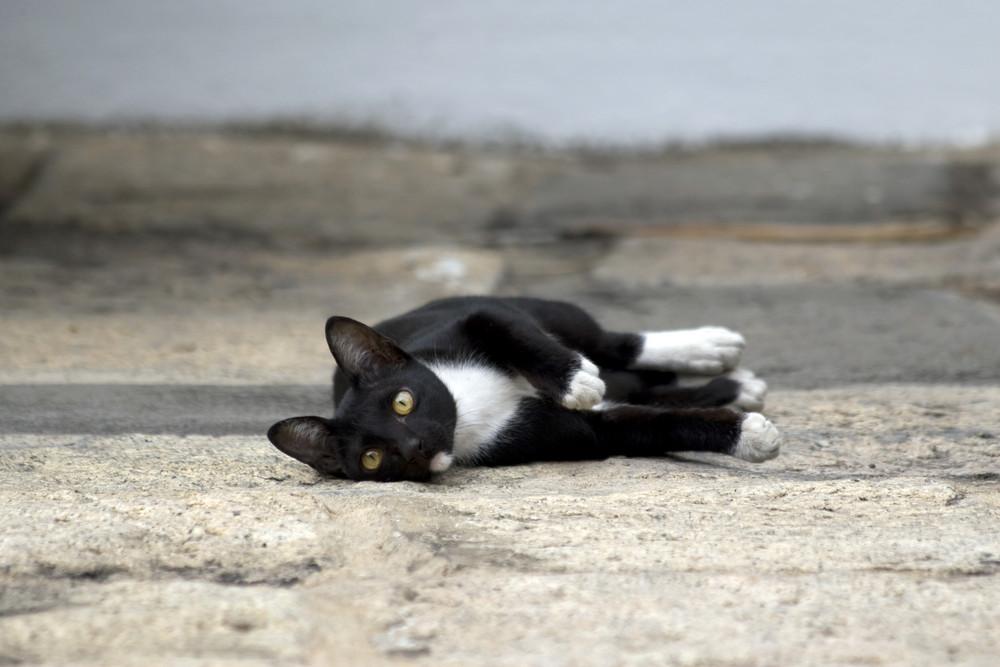 ... auch ein niedliches Kätzchen aus Bangkok ...