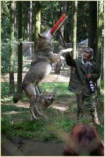 Auch ein Wolf will mal spielen