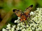 ..auch eine Fliege....