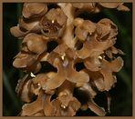 Auch eine Orchidee