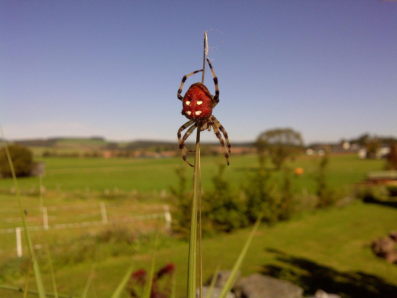 Auch eine Spinne kann schön sein!