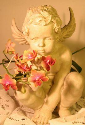 Auch Engel lieben Orchideen