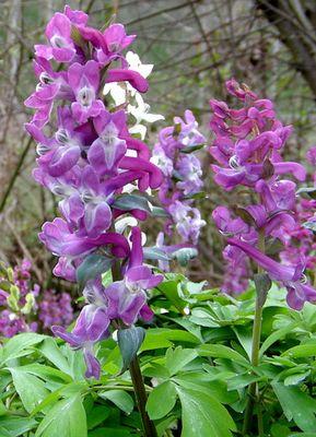 Auch Frühlingsblumen