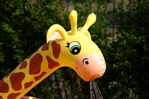 Auch Giraffen muessen mal k.....