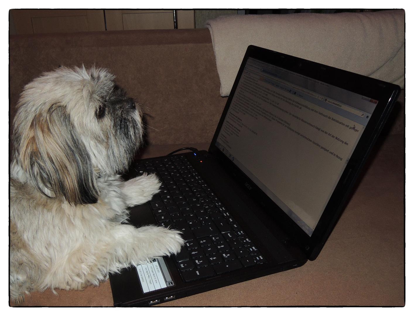 Auch Hunde nutzen Laptops