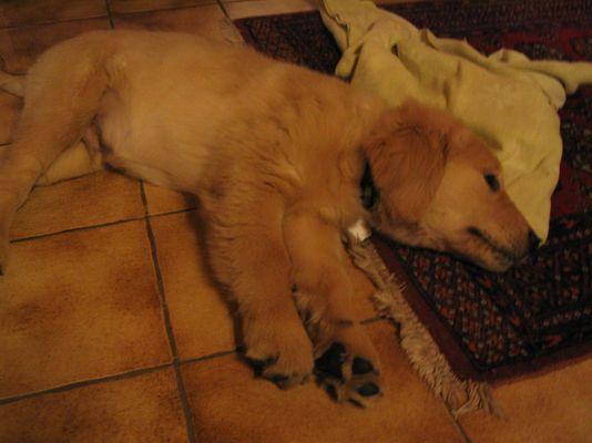 Auch Hunde werden müde ...