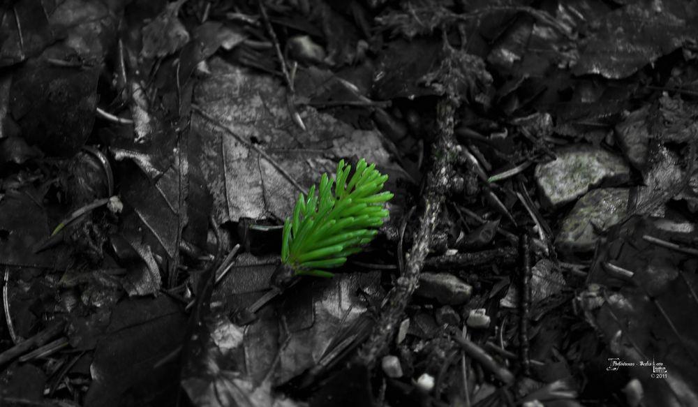 Auch im Dunkeln erblüht die Hoffnung