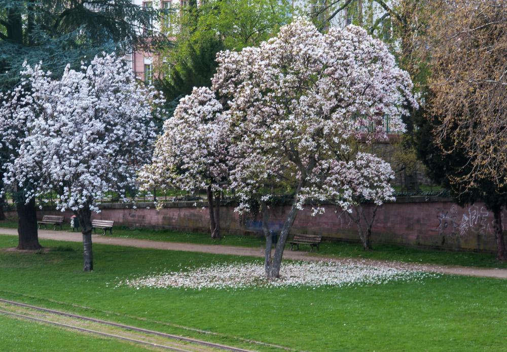 """Auch im Frühling kann es """"schneien""""..."""
