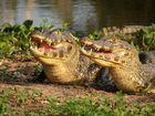 Auch im Pantanal...
