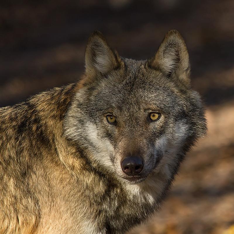 Auch im Tierpark Sababurg