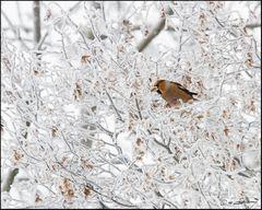 auch im Winter ....