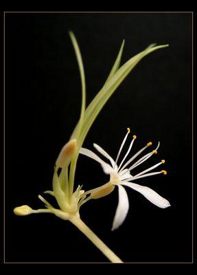 Auch im Winter blühen Blumen