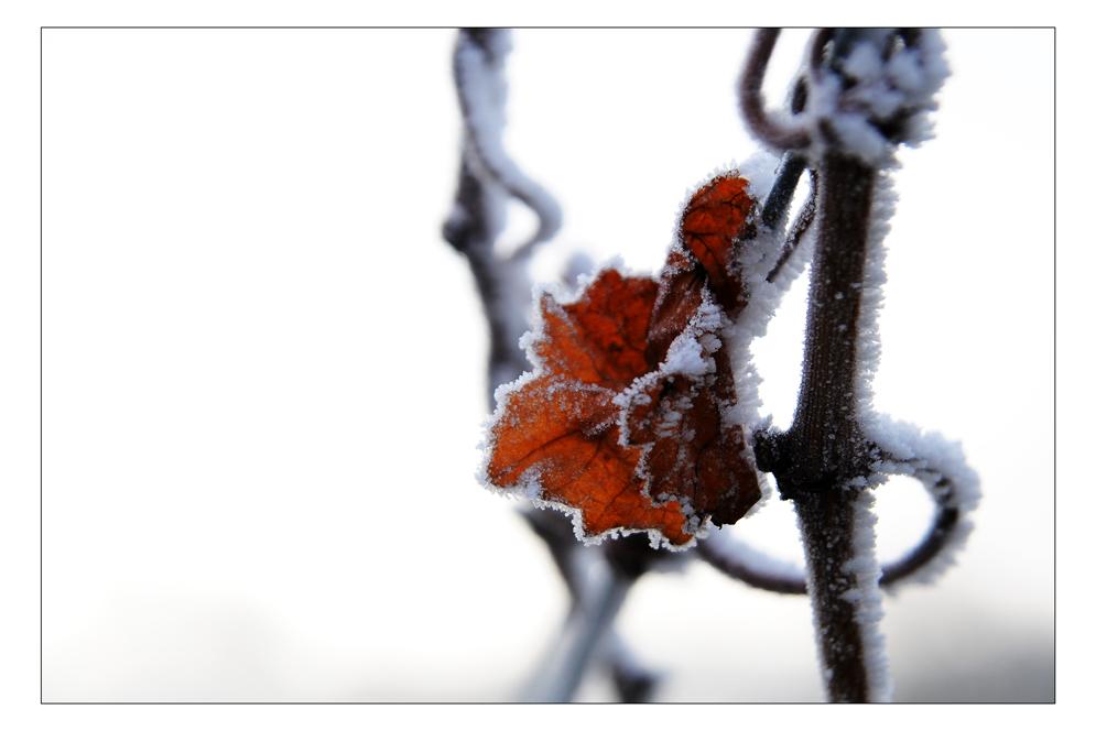 Auch im Winter gibt es ein wenig Farbe...