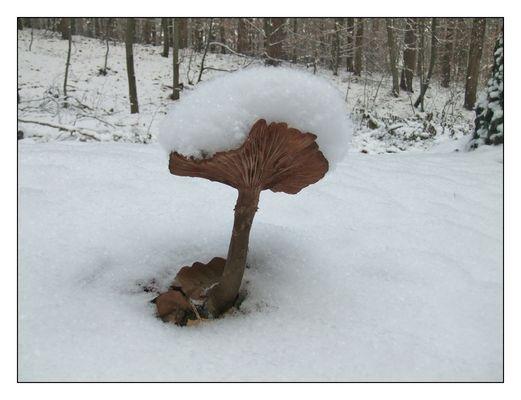 Auch im Winter gibt es Pilze!