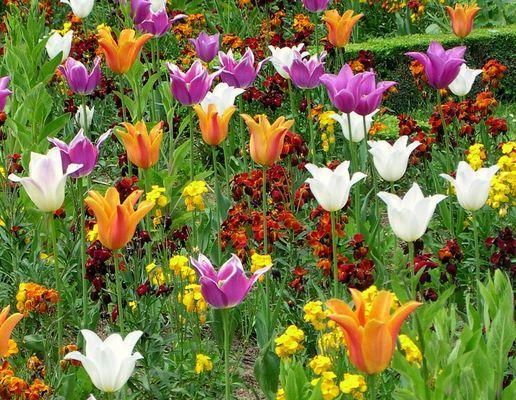 Auch in D'land wird`s mal wieder Frühling - nur wann?