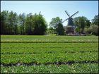 Auch in Lisse ( Holland ) steht eine alte Mühle