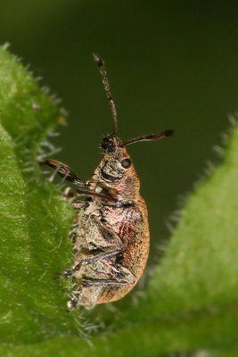 Auch Käfer können lachen!