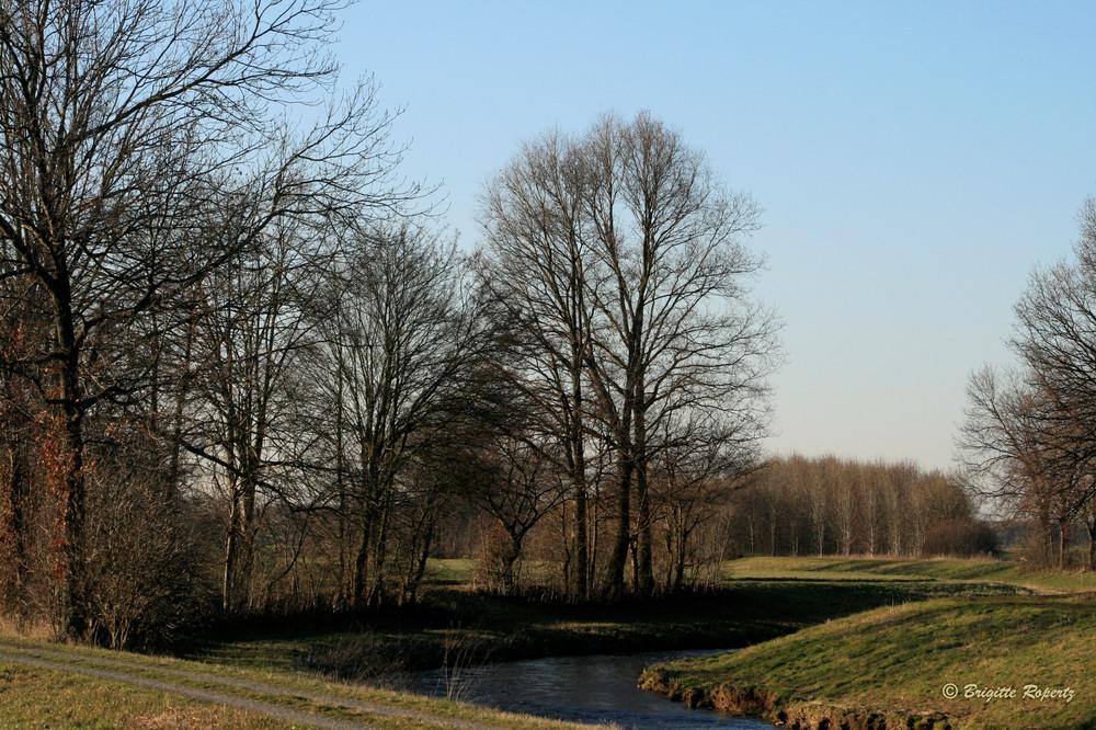 Auch kahle Bäume haben bei Sonnenschein ihren Reiz