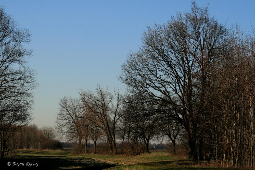 Auch kahle Bäume haben bei Sonnenschein ihren Reiz II