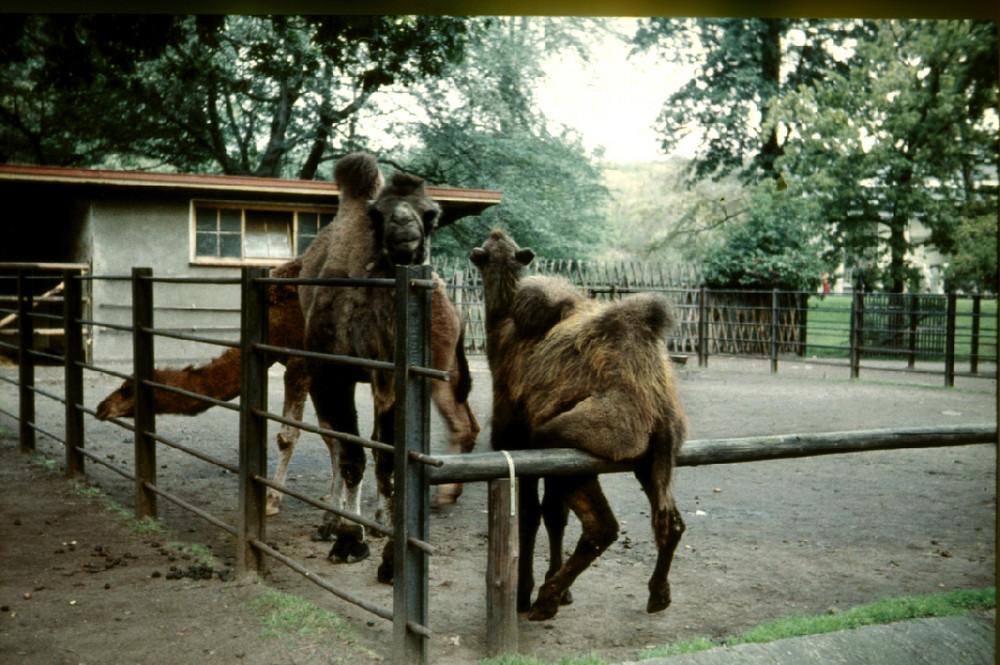 Auch Kamele müssen mal sitzen
