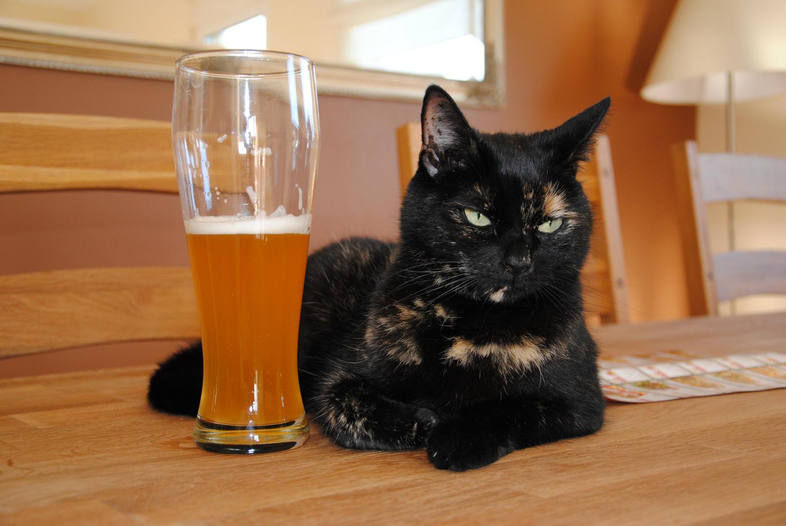 auch Katzen haben Durst