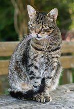 Auch Katzen haben eine Körpersprache!
