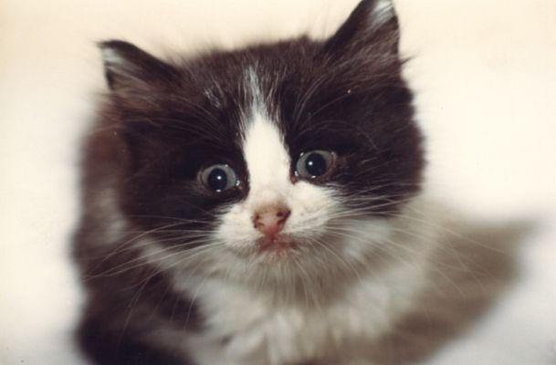 auch Katzen können weinen