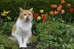 auch Katzen lieben ein schönes Ambiente