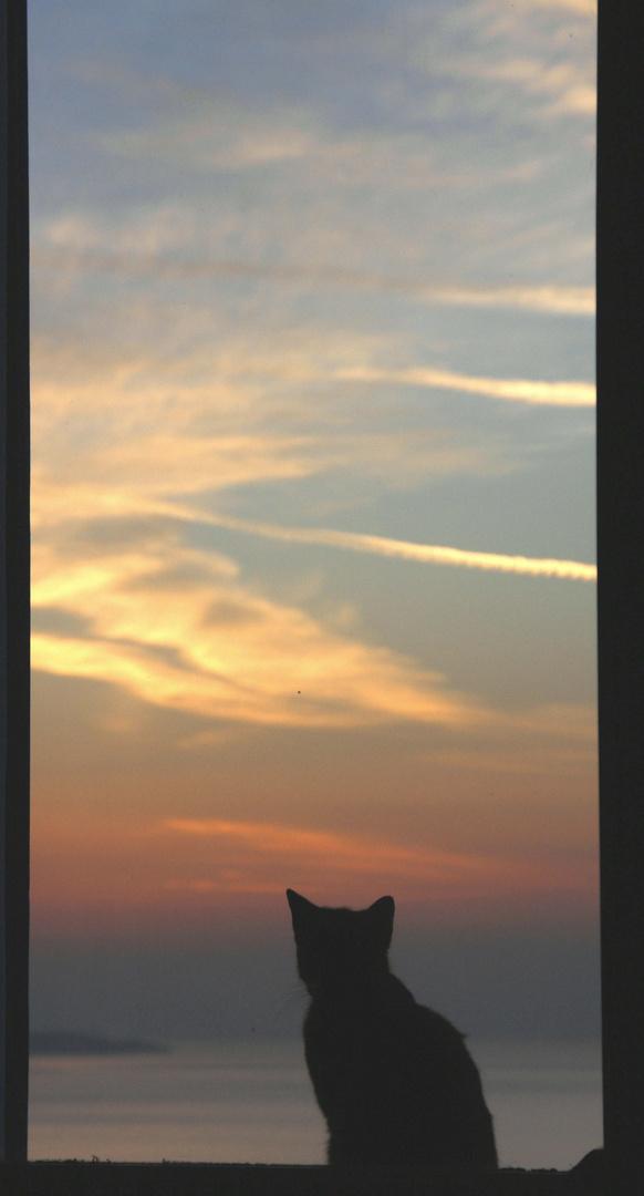 auch Katzen lieben Sonnenuntergänge ...