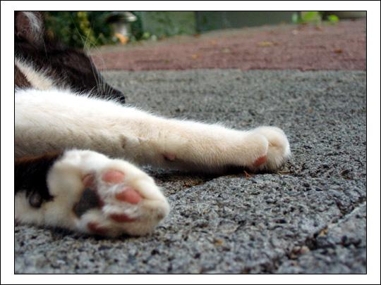 Auch Katzen macht die Hitze zu schaffen...