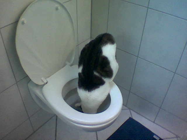 Auch Katzen müssen auf den Topf