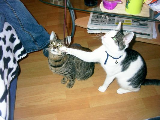 auch katzen schlagen zu ;-)