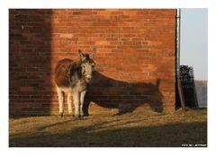 Auch kleine Esel werfen grosse Schatten